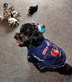 etty boo showing off her new Betty Boop denim jacket at her home in the UK