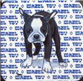 Beverage Coasters - Boston Terrier Puppy - Mazel Tov - Jewish - Zeppa Art
