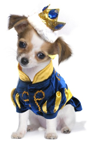 Prince Charming - Dog and Puppy Costume with Jeweled Gold Crown