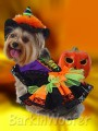 Dog Puppy Costume - Halloween Witch