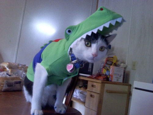 Charlie the crocodile kitty