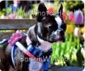 Custom Photo Mousepad from Your Photo - from BarkinWoofer.com