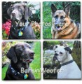 Custom Photo Sandstone Coasters (4) from Your Photos - from BarkinWoofer.com