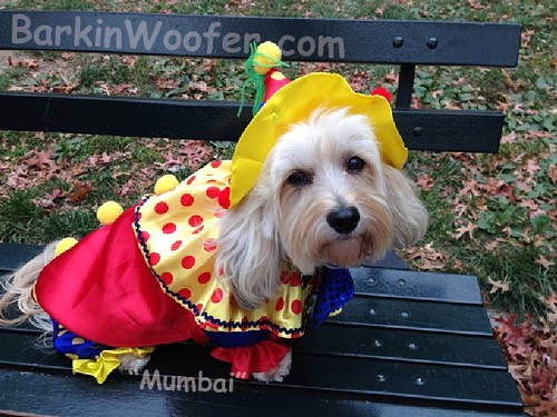 Mumbai ofNew York in a new Shiny Clown costume for Halloween