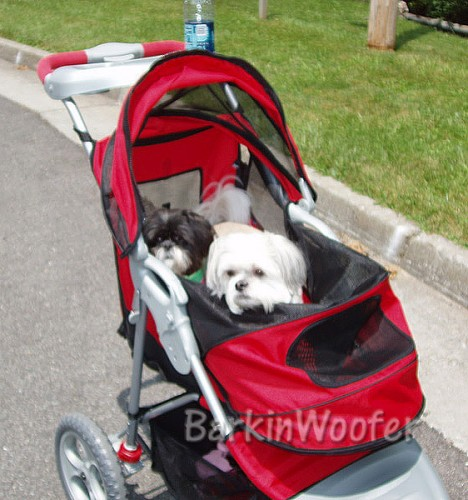 "Maggie and Chelsea in their new Pet Gear AT3 stroller with the ""top down"""