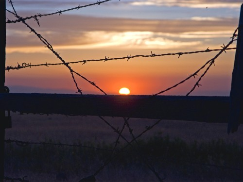 Barbwire Sunset Print Full