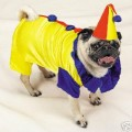 Dog Clown Costume.jpg
