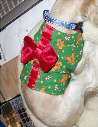 Christmas Morkies vest.jpg