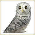 harmony ball great gray owl pot belly