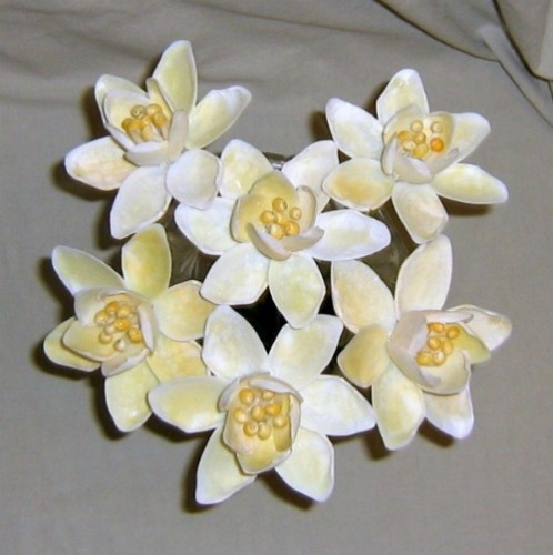 Daffodil seashell crafts flowers ocean blooms now for Sea shell crafts