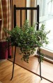 Adirondack Chair Plant Stand w Plant.jpg