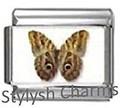 BI053 Butterfly SB001.jpg