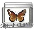 BI033 Italian Charm BUTTERFLY INSECT Photo Charm