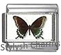 BI041 Italian Charm BUTTERFLY INSECT Photo Charm