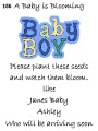 baby shower seed packbabyboy156.jpg