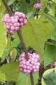 BB Pink1.jpeg