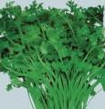 VeggiesCilantro.jpg