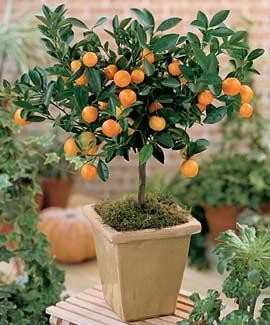 plantsminature orange.jpg