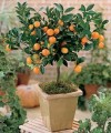 plantsminature orange.jpg