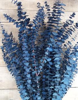 PlantseucalyptusBabyBlue.jpg