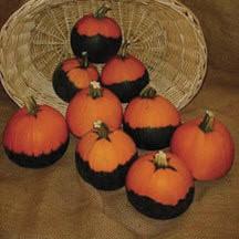 VeggiesBatwingPumpkin#1.jpg