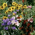 FlowersWildBirdandButterflyMix.jpg