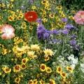 FlowersWildDryMix.jpg