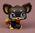 Littlest Pet Shop #1571 Black Chihuahua Puppy Dog With Blue Eyes, Orange Brown Trim