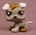 Littlest Pet Shop #1877 Gray Puppy Dog with White Floppy Ears, Purple Eyes, Petriplets, 2009