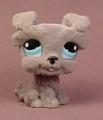 Littlest Pet Shop #1006 Fuzzy Or Flocked Gray Schnauzer Puppy Dog With Blue Eyes