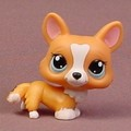 Littlest Pet Shop #1360 Blemished Orange Brown Welsh Corgi Puppy Dog Aqua Blue Eyes