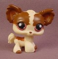 Littlest Pet Shop #335 Brown & Tan Long Hair Chihuahua Puppy Dog With Deep Red Eyes