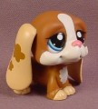Littlest Pet Shop #1655 Brown & White Bassett Hound Puppy Dog With Blue Eyes, Tan Ears