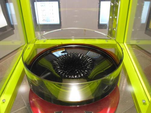 ferrofluid-montreal-canada