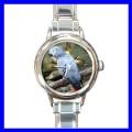 Round Charm Watch AFRICAN GREY PARROT Bird Pet Animal (11811700)