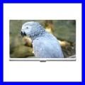 Business Card Holder Name Case Box AFRICAN GREY PARROT Bird Pet (12294949)