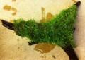 riccia fluitans on wood.jpeg