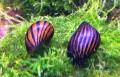 snail.jpeg
