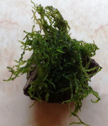 lava moss.jpeg