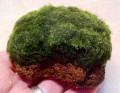 moss rock.jpeg