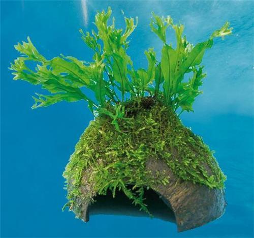 windelov fern on coconut cave.jpeg