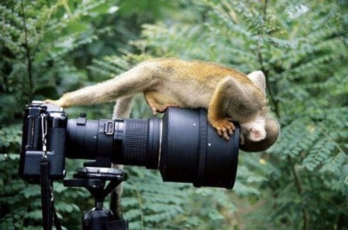 cute-animals-with-camera-17
