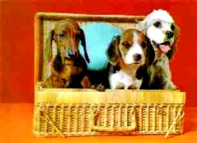 3d Lenticular 3 dogs in a basket German  Print