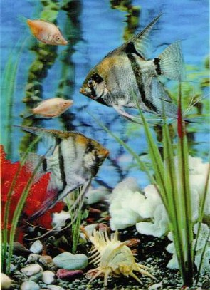 3d Lenticular SALT WatER RARE FISH & plants Print