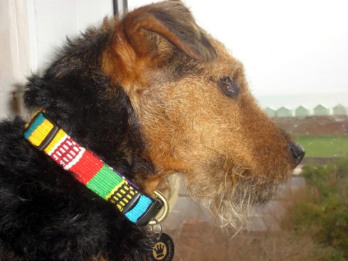 "Woody in the UK showing off her new Mayan hand-woven ""Traditional"" collar"