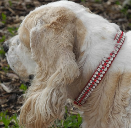 "Princess Molly Freckles of Wyoming in her new ""My Valentine"" crystals on nylon  collar"