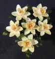new%20seashell%20crafts%20decor%20nautical%20flowers%20daffodils.jpg