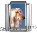 AFGHAN HOUND DOG Photo Italian Charm 9mm Link - 1 x DG020 Single Bracelet Link