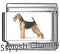 DG025 Airedale Terrier Dog 4.jpg
