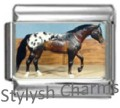 HORSE APPALOOSA STALLION Photo Italian Charm 9mm Link - 1 x HO015 Single Link